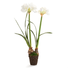 "Amaryllis 37"" Double Drop-In, White 