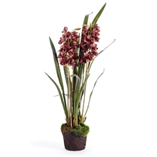 "Cymbidium X3 36"" Drop-In 